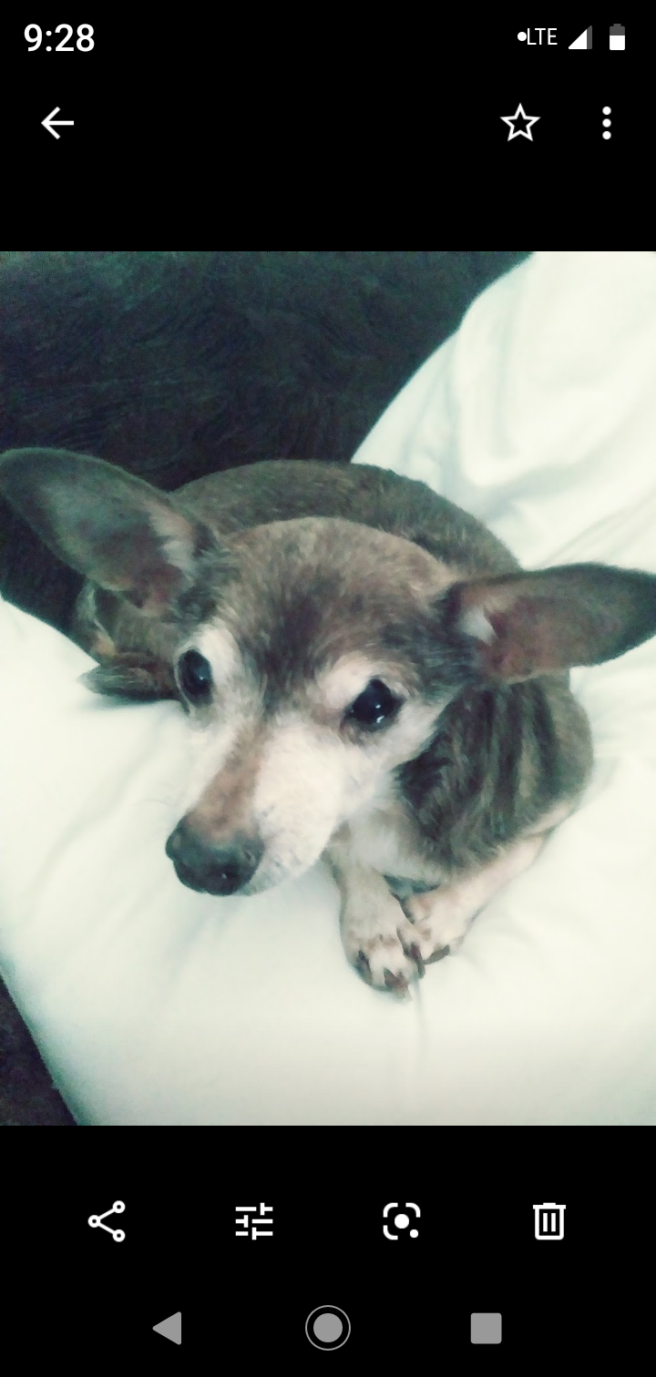 Remembering Tinkerbell