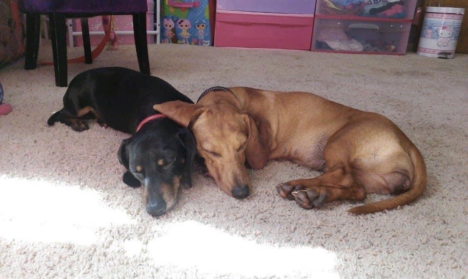 Remembering Ryder and Ruby